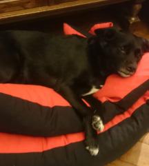 Krevet za psa 15-20 kg