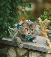 Ogrlice za pse i mačke