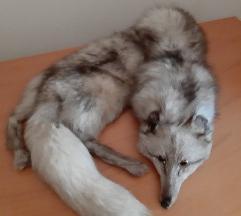 Bunda lisica