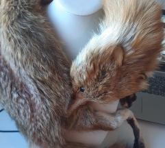 Ovratnik   od lisice
