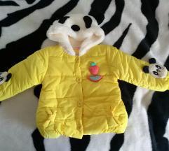 Jaknica panda