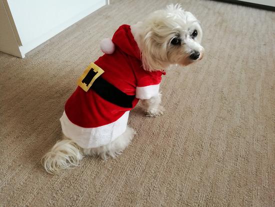 Božićno odijelce za psa