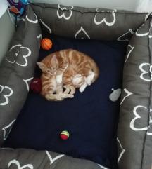 Krevet/ležaj za mačke i pse
