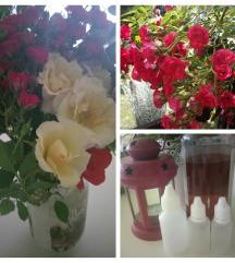 Tinktura od ruže
