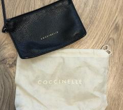 Coccinelle torbica