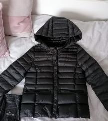Zara pernata jaknica(134)