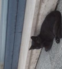 Poklanjam crnu mačku