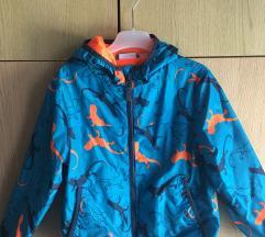 Suskavac jaknica proljetna
