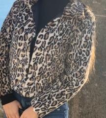 Leopard bundica