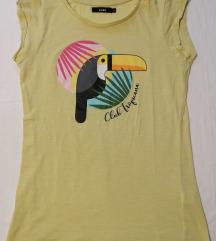 Majica papiga