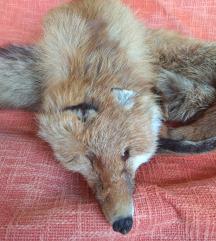 Krzneni ovratnik lisica