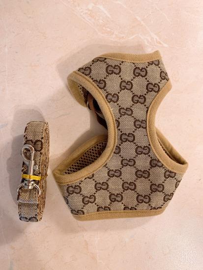 Gucci podvodac za pasa