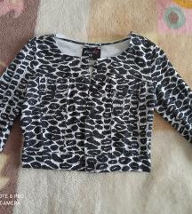 Leopard jaknica 😍