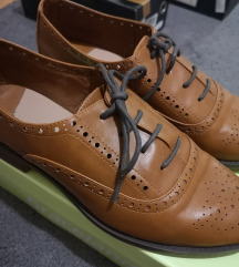 Stradivarius oxfordice