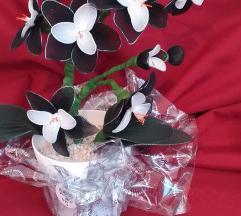 Crno-bijela orhideja