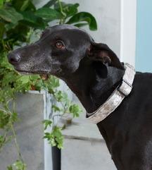 NEXT, ogrlica za psa