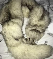 Polarna lisica ovratnik